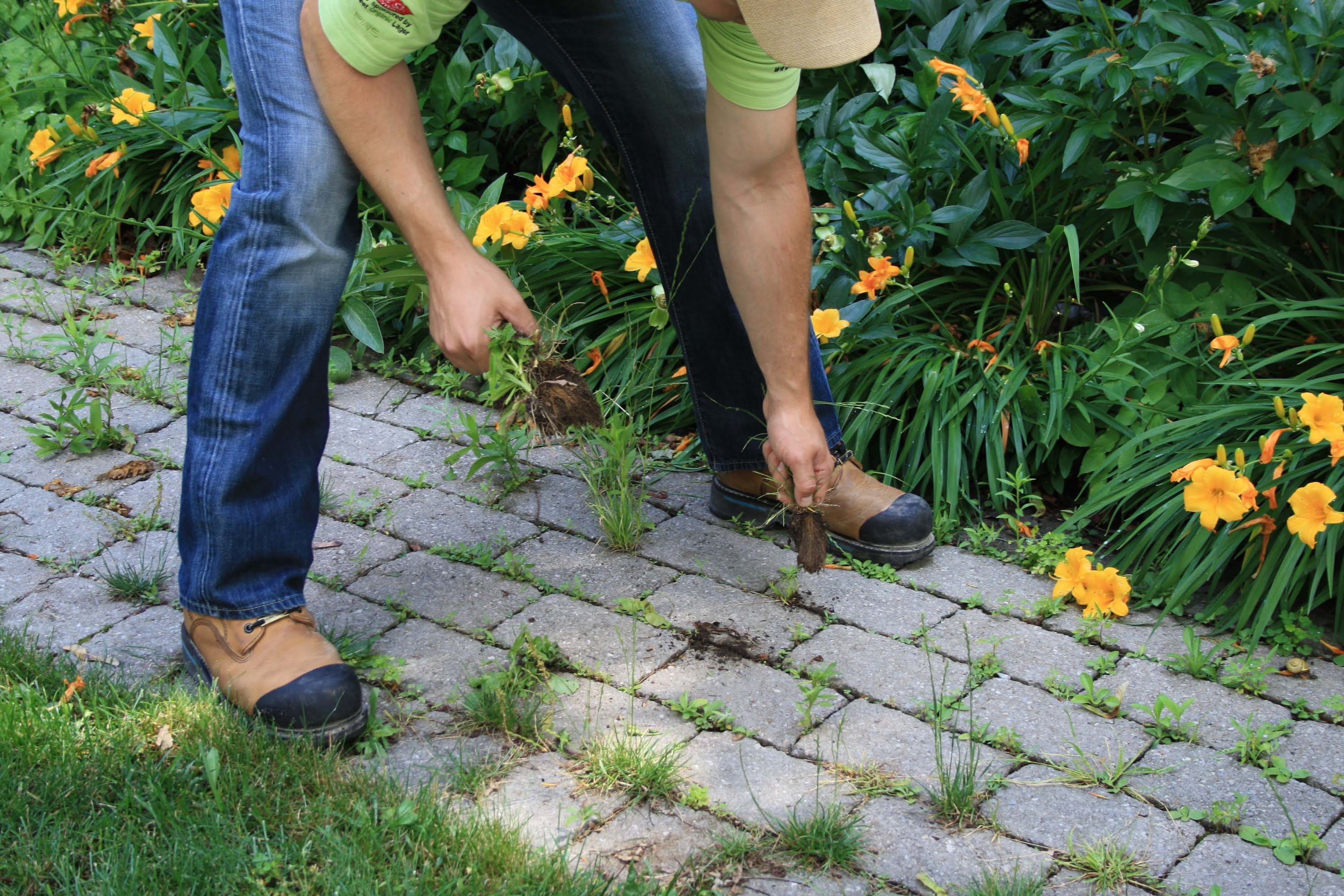 how to prevent weed growth between your pavers mr interlock